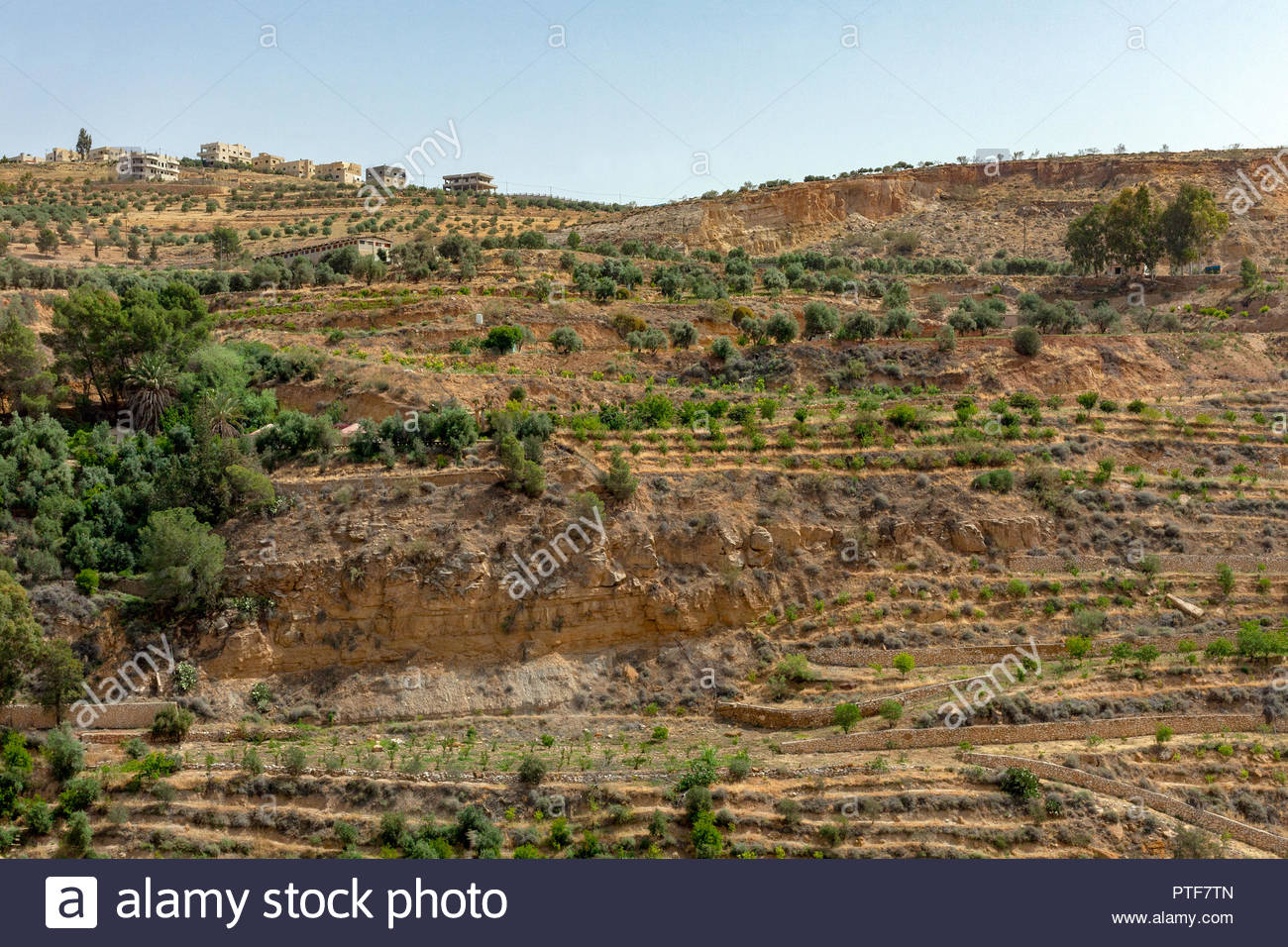 Terraced Olive and Tree Farm/Garden in Rural Jordan, Middle East 2018 - Stock Image