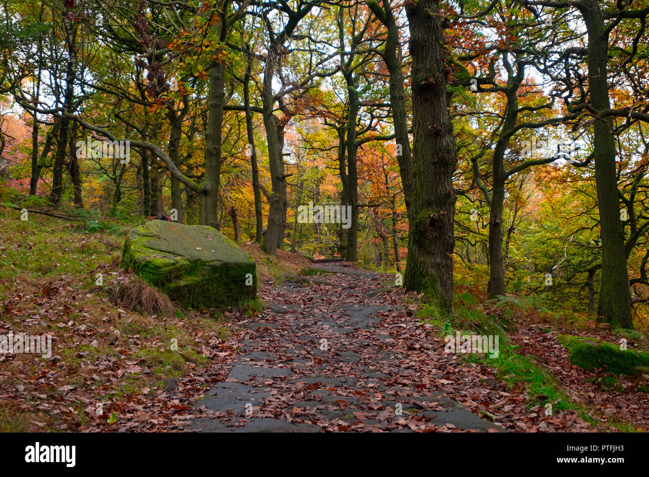 Padley Gorge footpath, an ancient woodland in the care of the national trust - Stock Image
