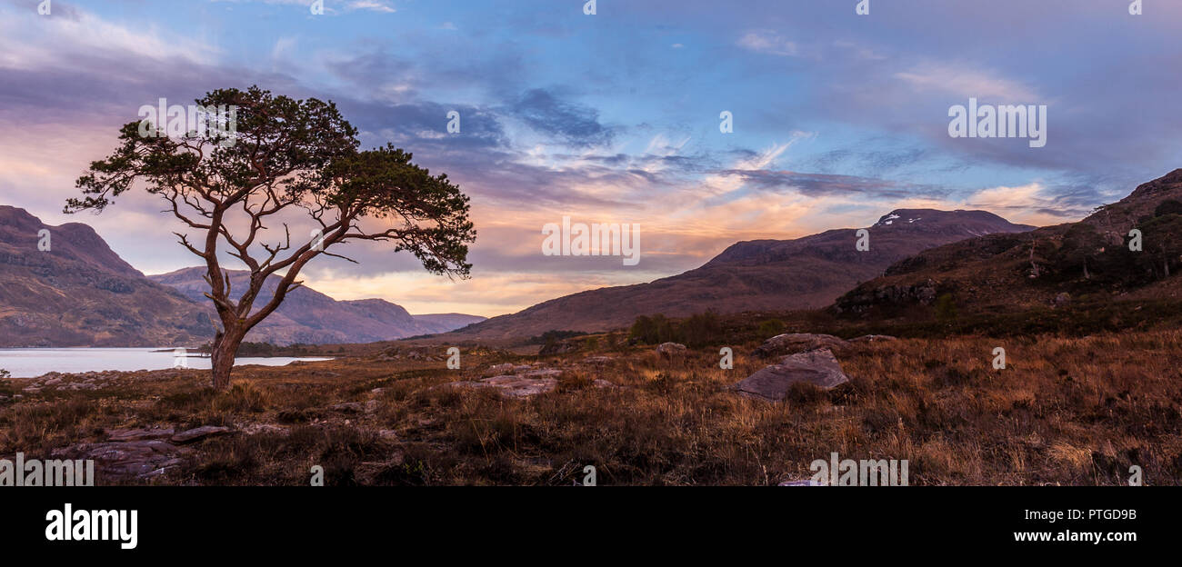A lone scots pine standing on the banks of Loch Maree in Wester Ross in the Scottish Highlands The loch is the fourth largest freshwater loch in Scotl - Stock Image