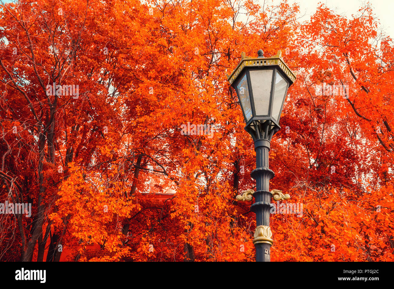 Fall trees background. Metal lantern on the background of the fall trees. Fall park scene in vintage tones - Stock Image
