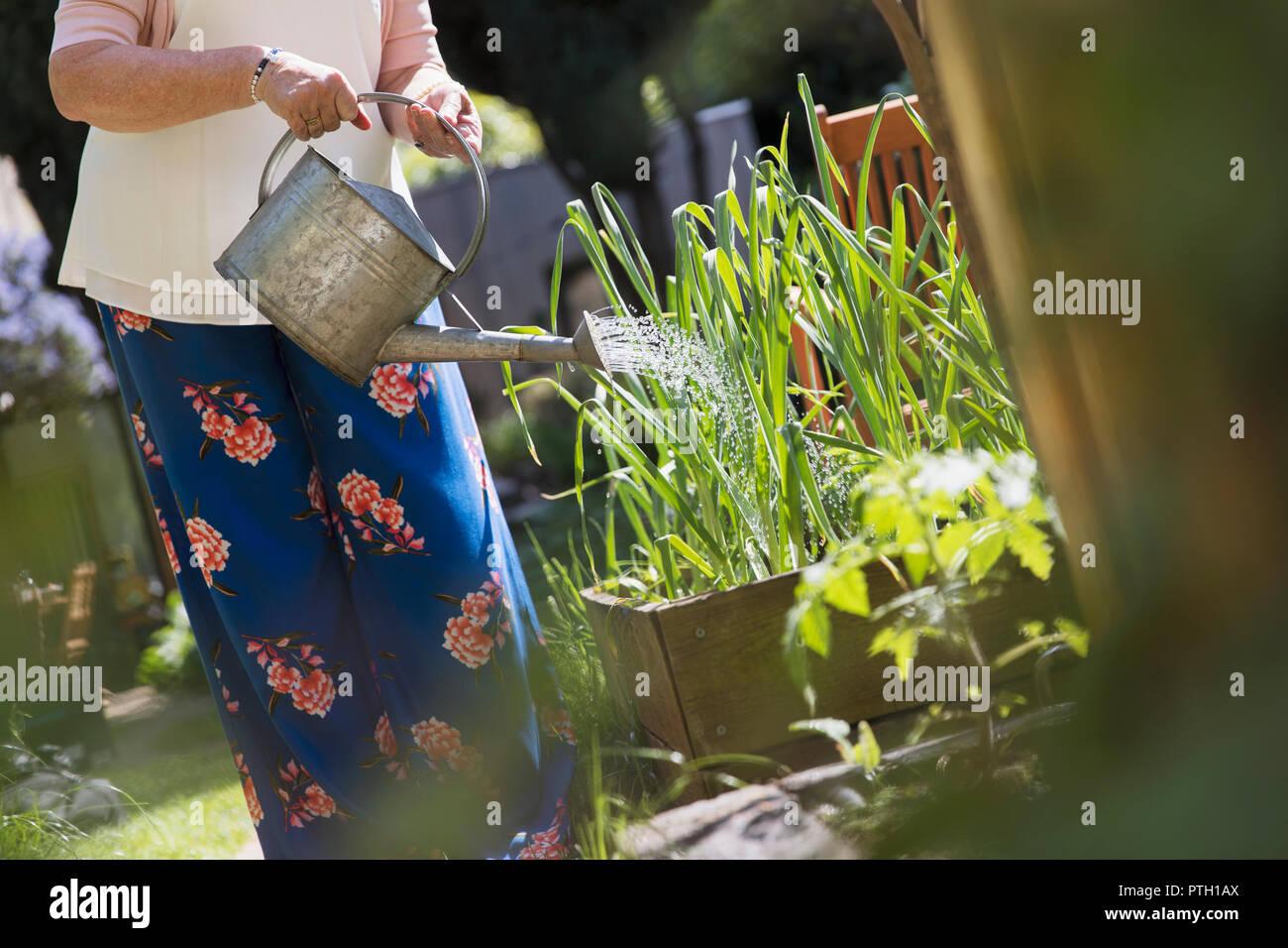 Woman gardening water plants - Stock Image