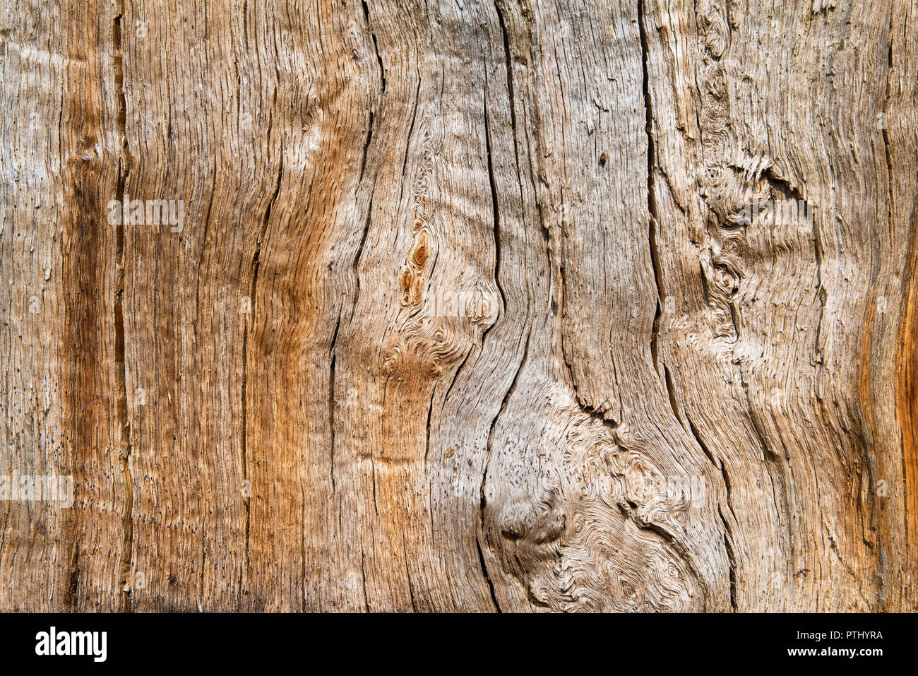 Oak wood in longitudinal section, beautiful texture filled with cracks and knots, background, close up Stock Photo
