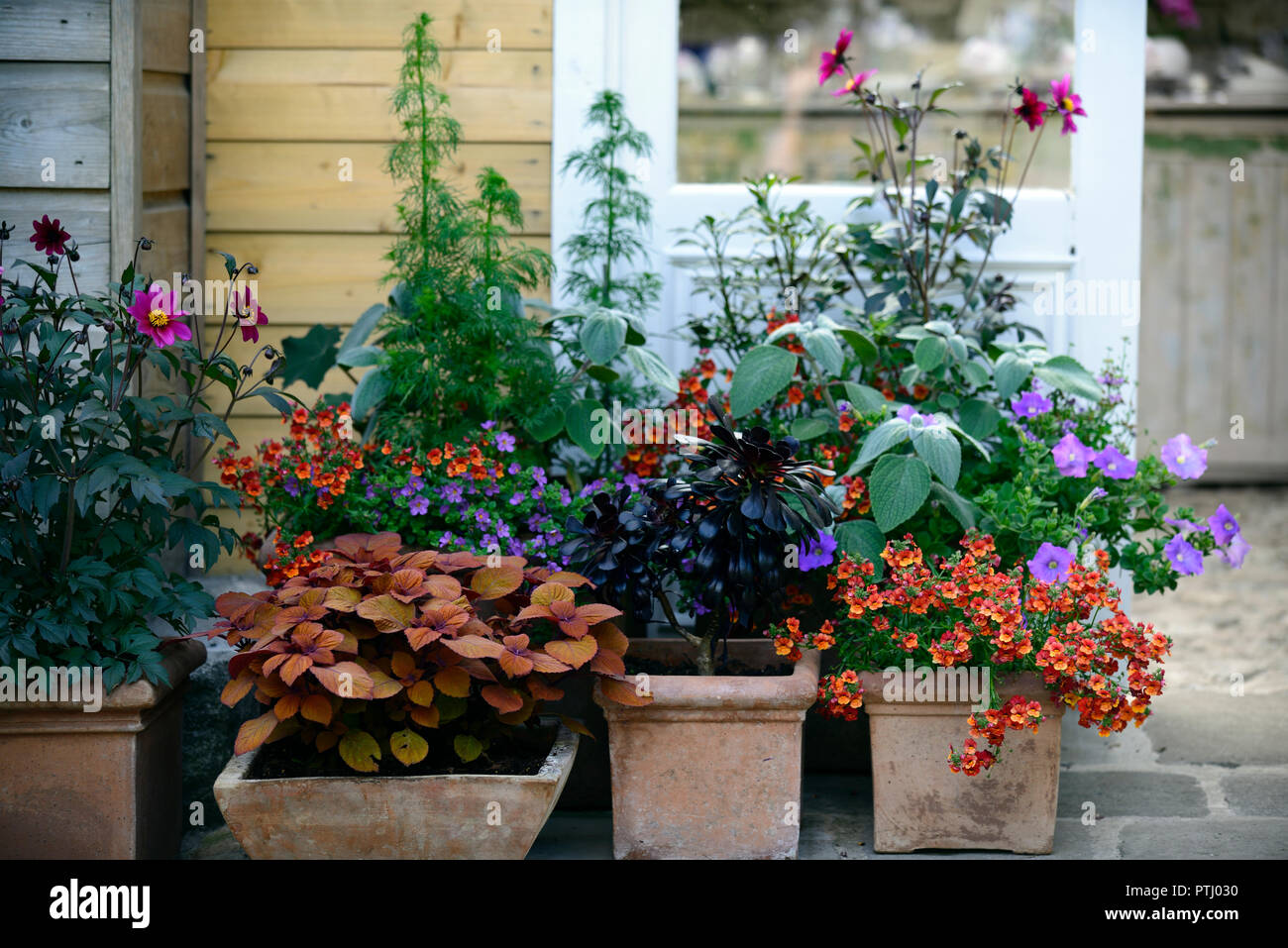 Coleus Containers Stock Photos Coleus Containers Stock Images