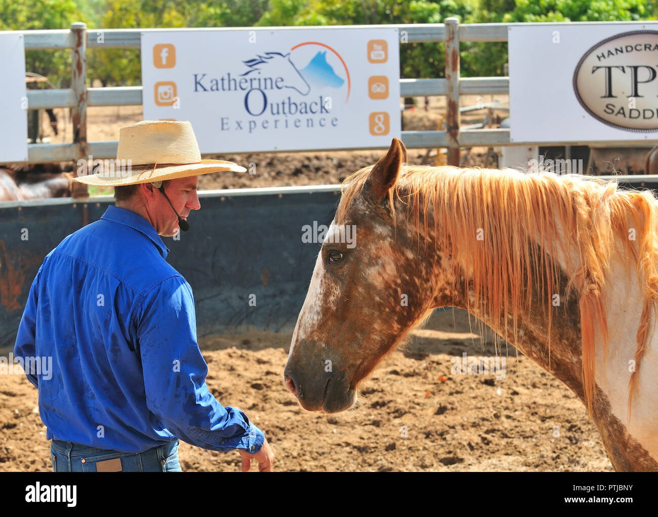 Tom Curtain the singing cowboy horse whispering  in his Outback Experience show in Katherine, Northern Territory, Australia Stock Photo