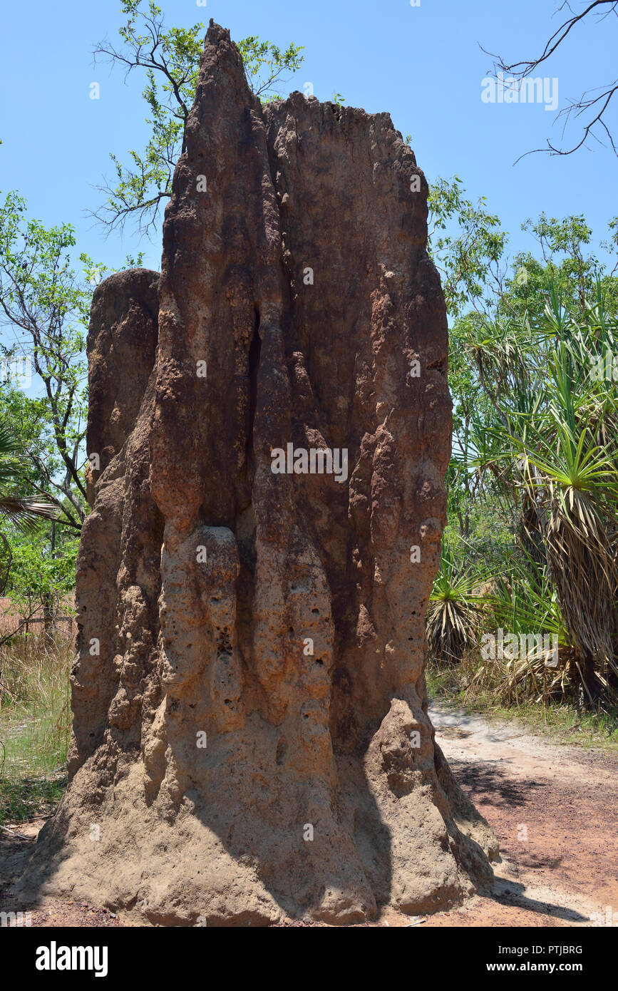 Giant mounds made by cathedral termites in the Litchfield National Park, Northern Territory, Australia Stock Photo