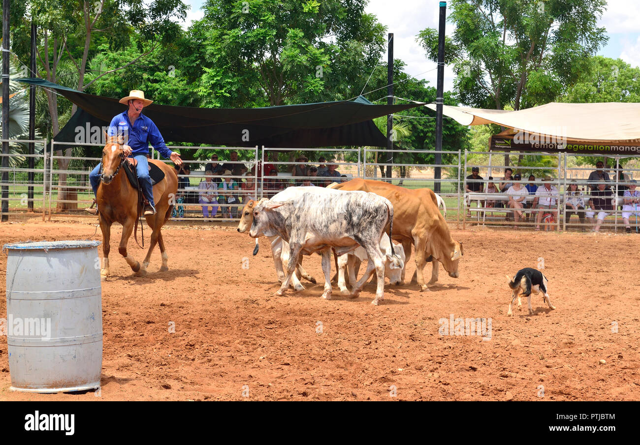 Tom Curtain the singing cowboy performing rounding up Steer in his Outback Experience show in Katherine, Northern Territory, Australia Stock Photo
