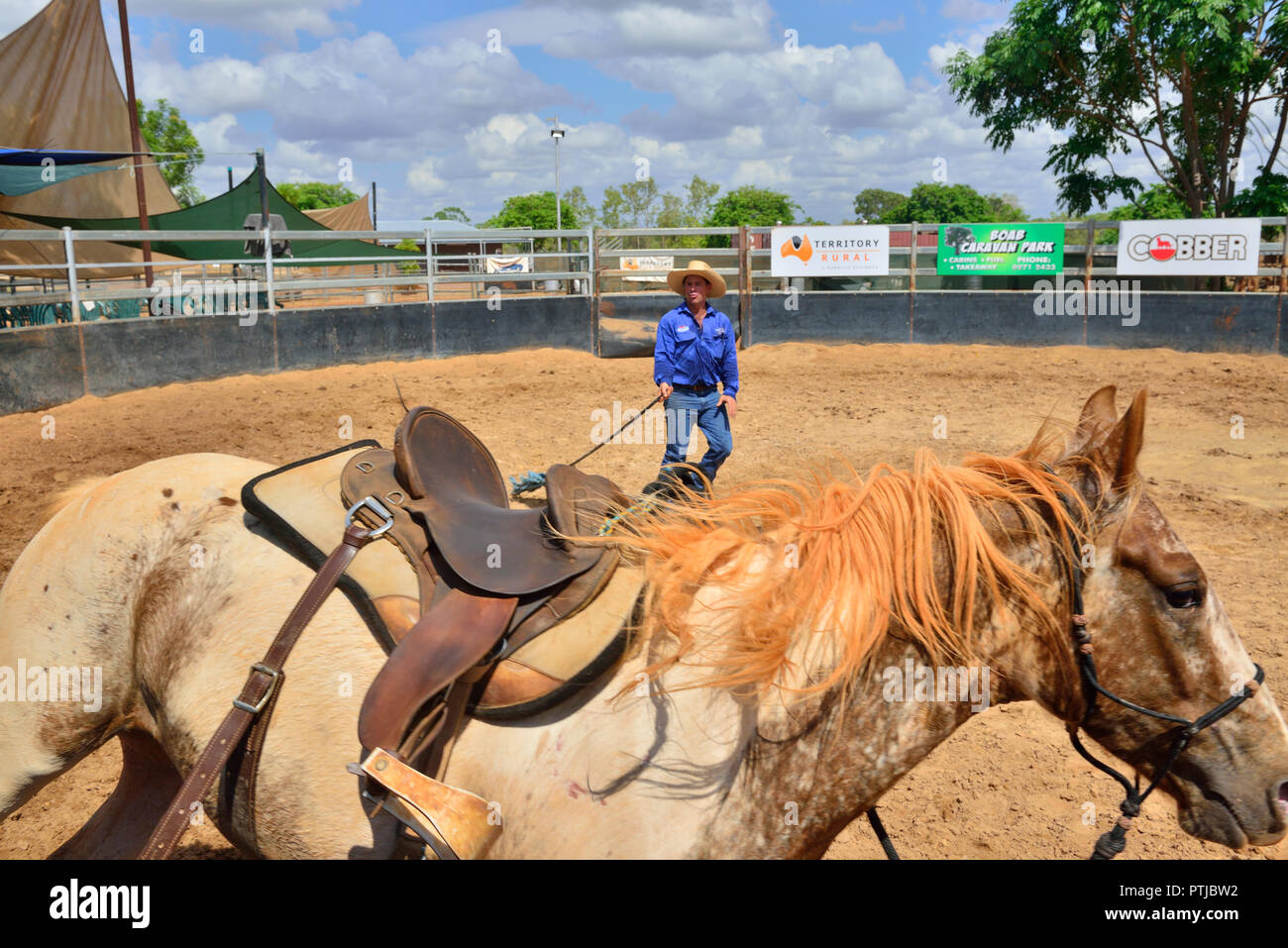 Tom Curtain the singing cowboy performing in his Outback Experience show in Katherine,Northern Territory, schooling  a young unridden wild horse. - Stock Image