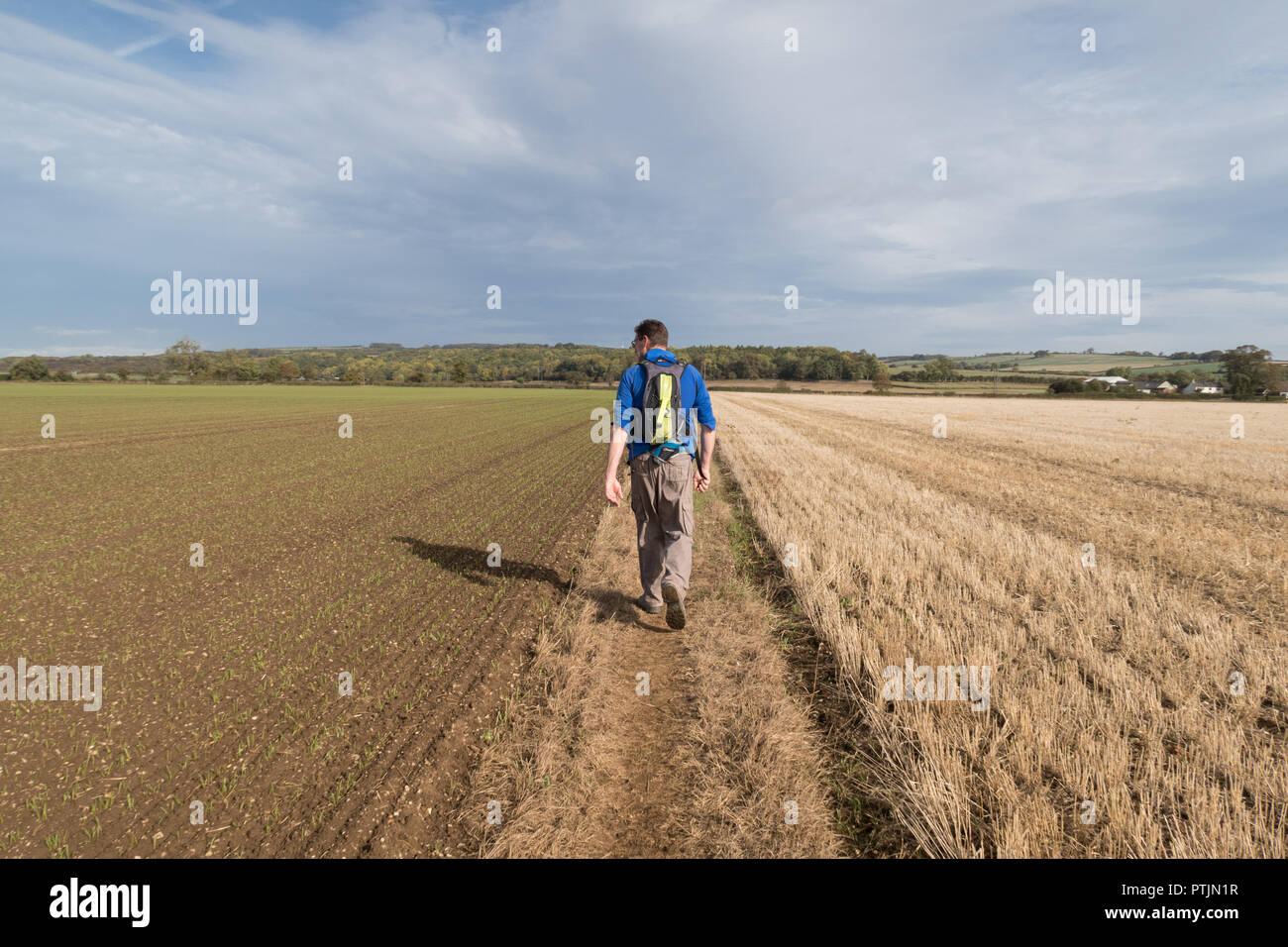 A walker on the Chalkland Way Footpath near Grimthorpe Wood, just north of Pocklington in East Yorkshire - Stock Image