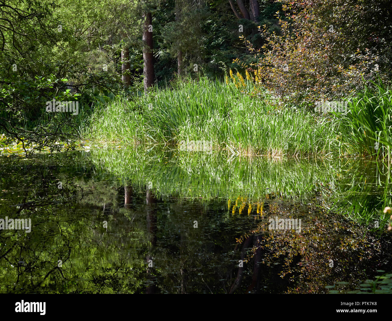 Looking across the peaceful Reflections in the water of a Pond at the St Andrews Botanic Gardens in Fife, Scotland. - Stock Image