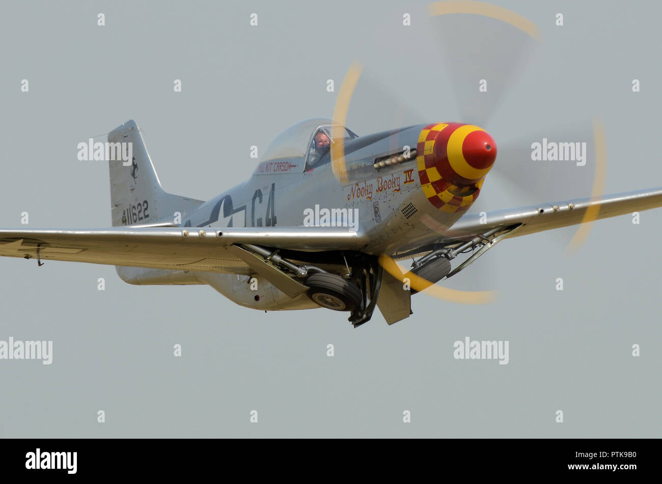 North American P-51 Mustang fighter plane named Nooky Booky IV taking off to display at an airshow Tucking up its undercarriage wheels. Space for copy - Stock Image