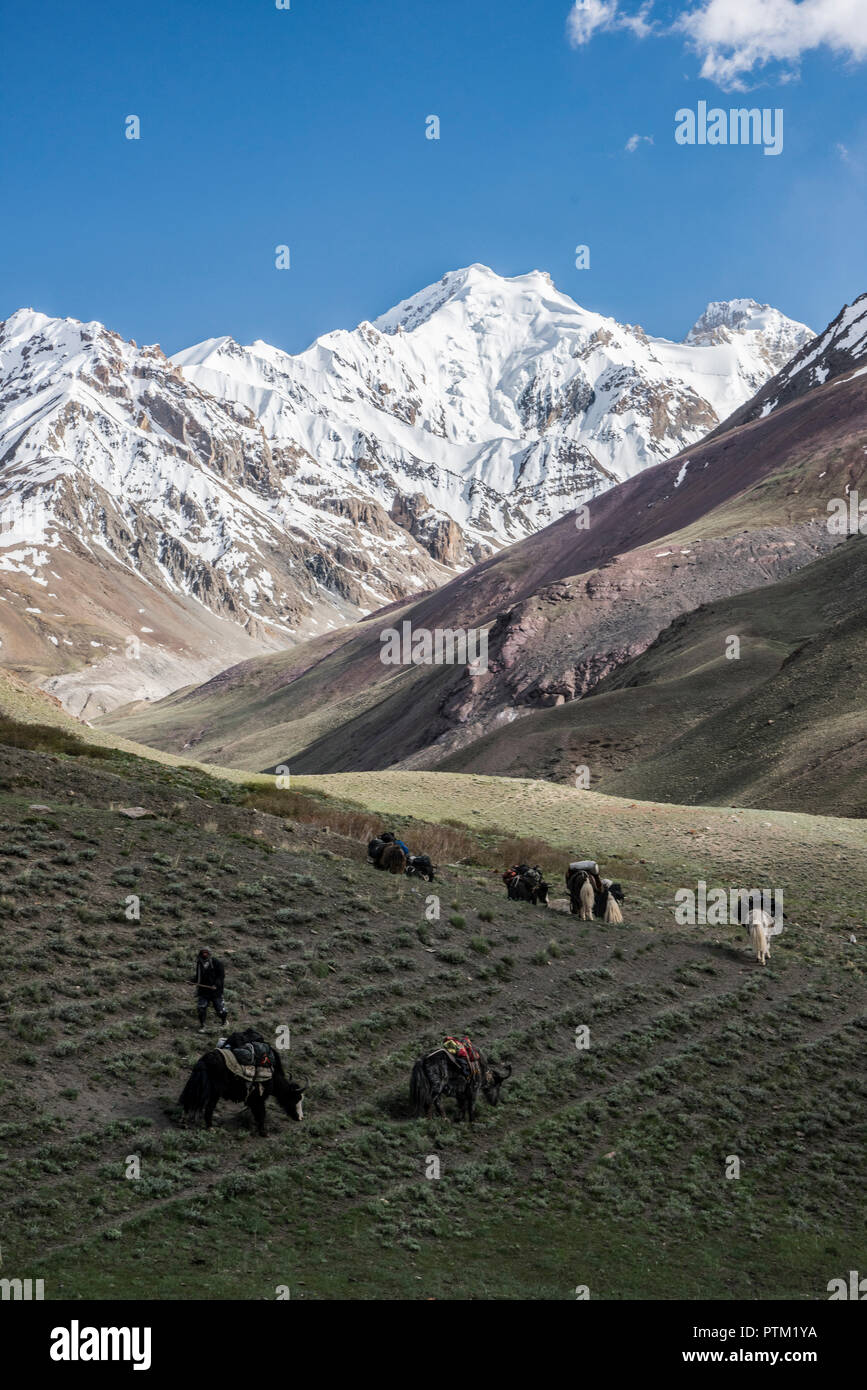 The yak train carrying  expedition equipment winds its way through the Irshad valley in the Wakhan Corridor of Afghanistan. - Stock Image