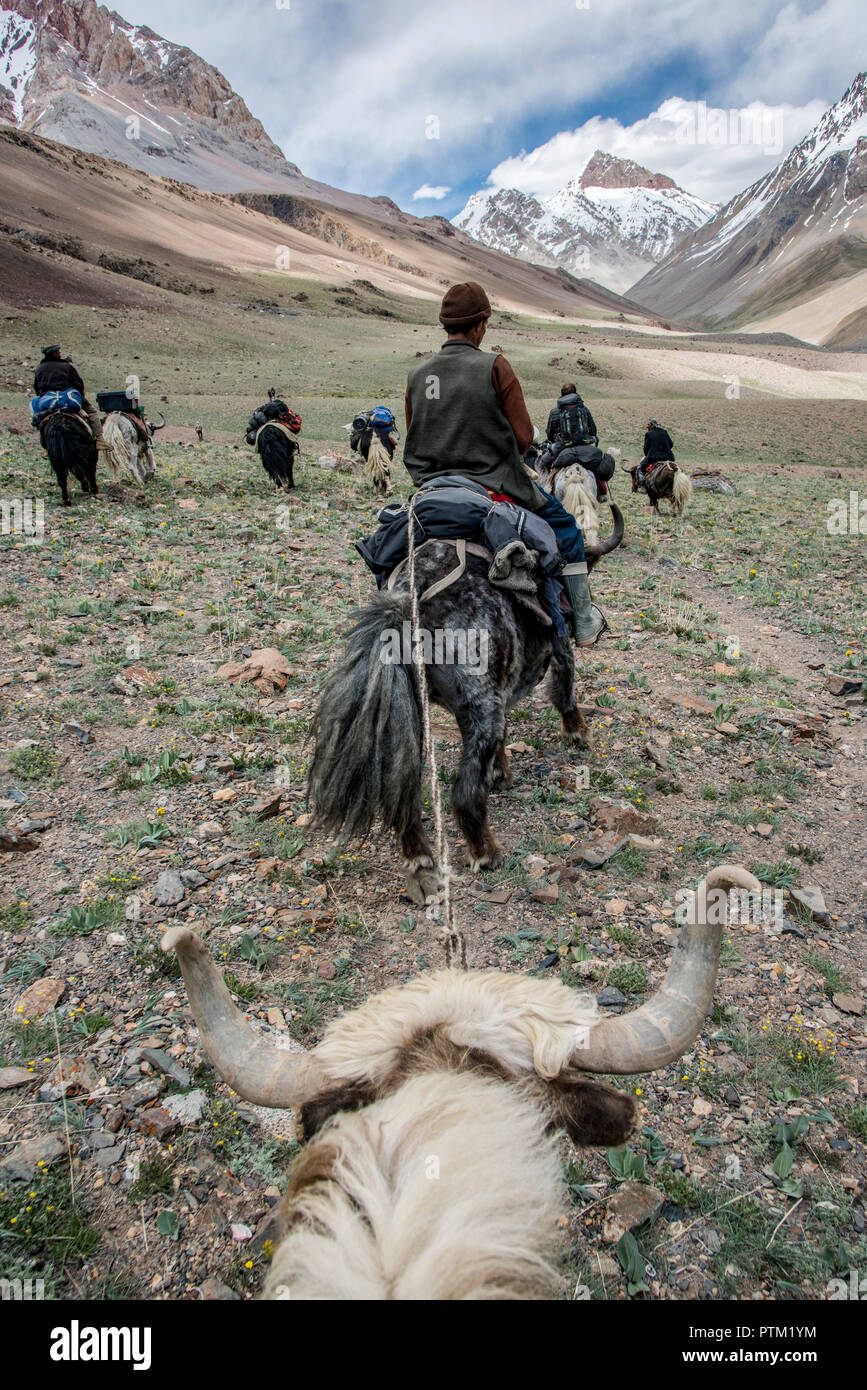 View from a yak in the Irshad valley in the Wakhan Corridor of Afghanistan. - Stock Image