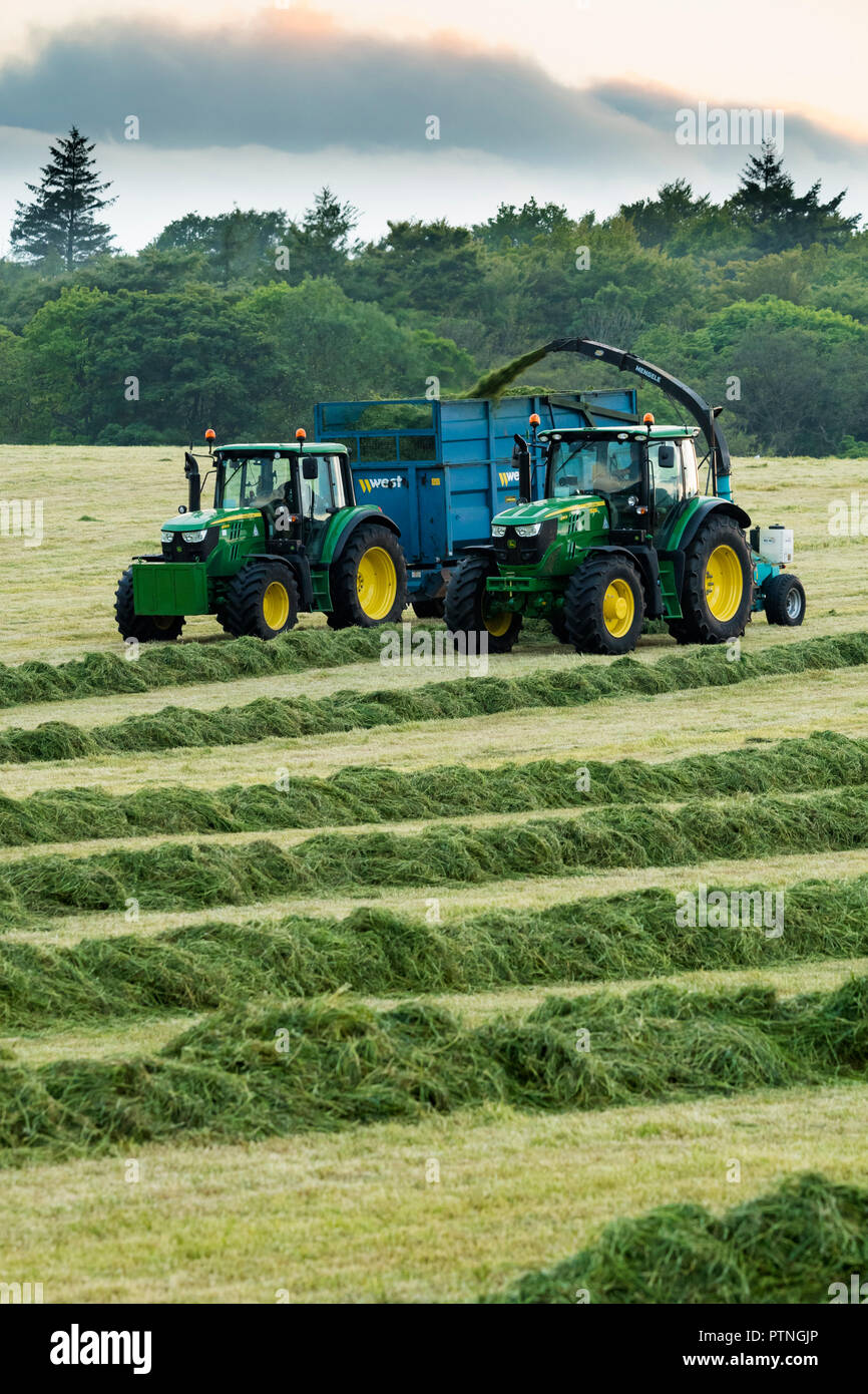 2 tractors working in farm field,1 tractor towing forage harvester & 1 collecting cut grass for silage in trailer - Yorkshire evening, England, GB, UK Stock Photo