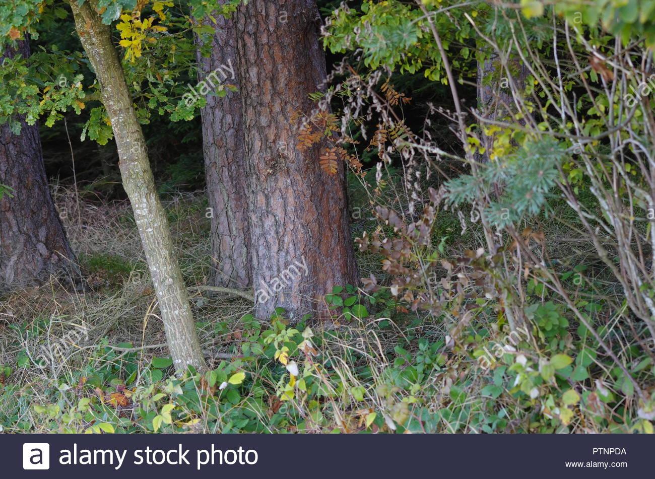 Landschaftsbild mit Wälder, lichtungen,stilleben Stock Photo