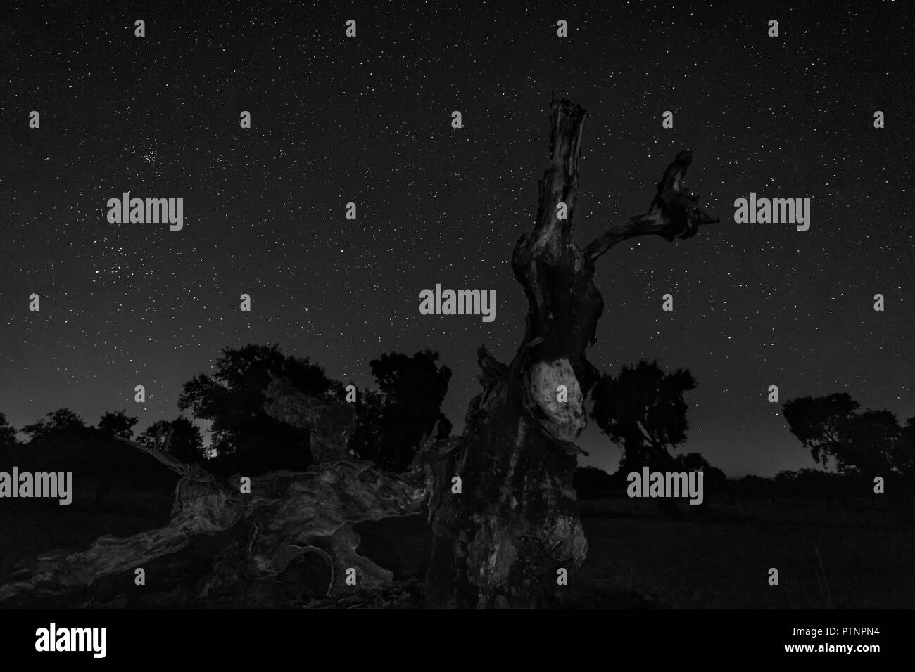 Night landscape with fallen tree in the foreground. - Stock Image