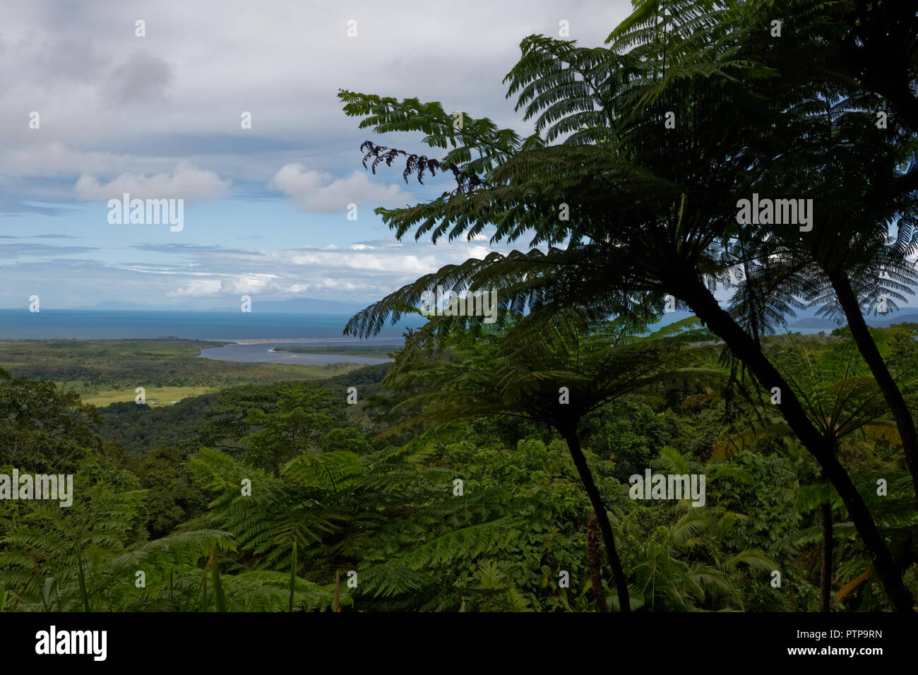 Rainforest view outlook - Stock Image