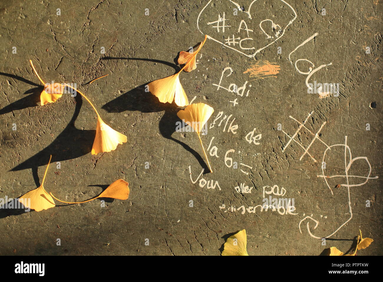 Autumn Gingko leaves in a banch with kids writings, Grasse,Alpes Maritimes, 06, PACA, France - Stock Image