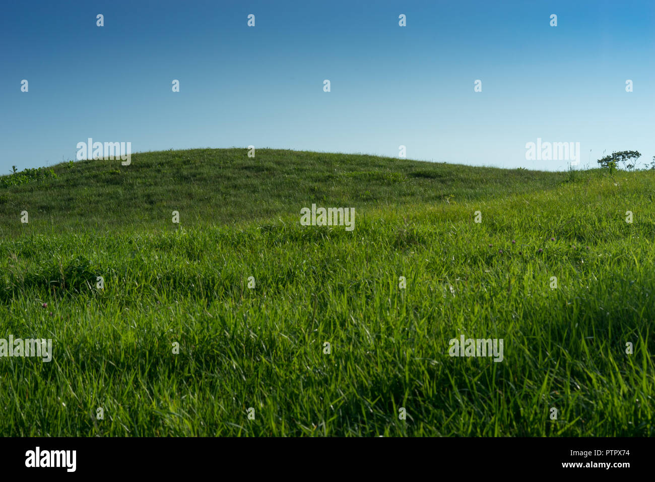 hill covered with unshaved green grass against a blue sky without clouds. - Stock Image
