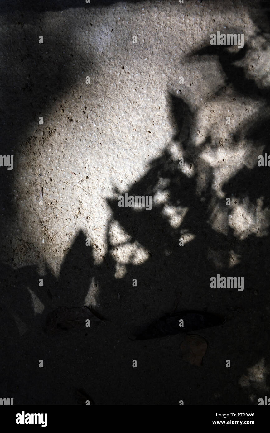 Shadows of tree leaves on the ground Stock Photo