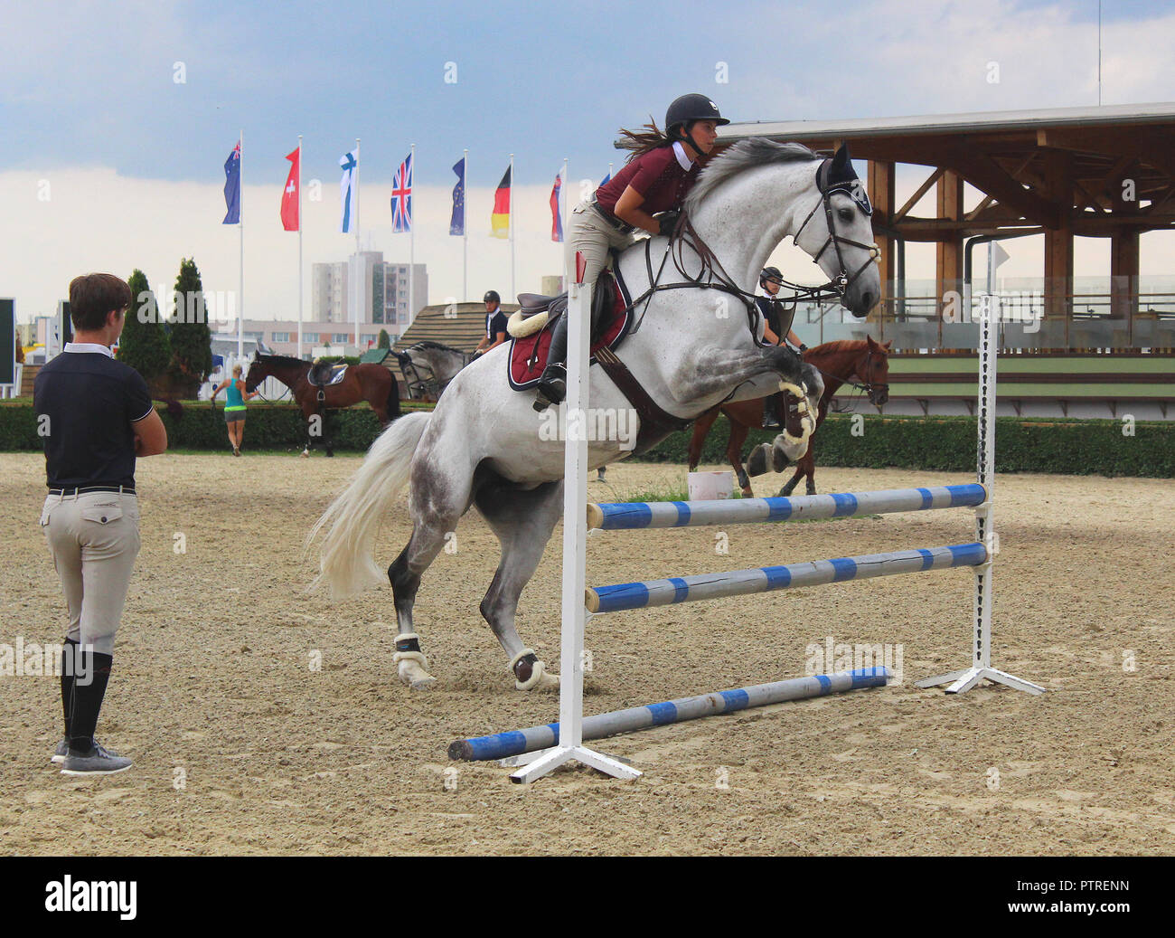 Show Jumping Training Female Rider On A Beautiful White Horse Jumping Through A Barrier Stock Photo Alamy