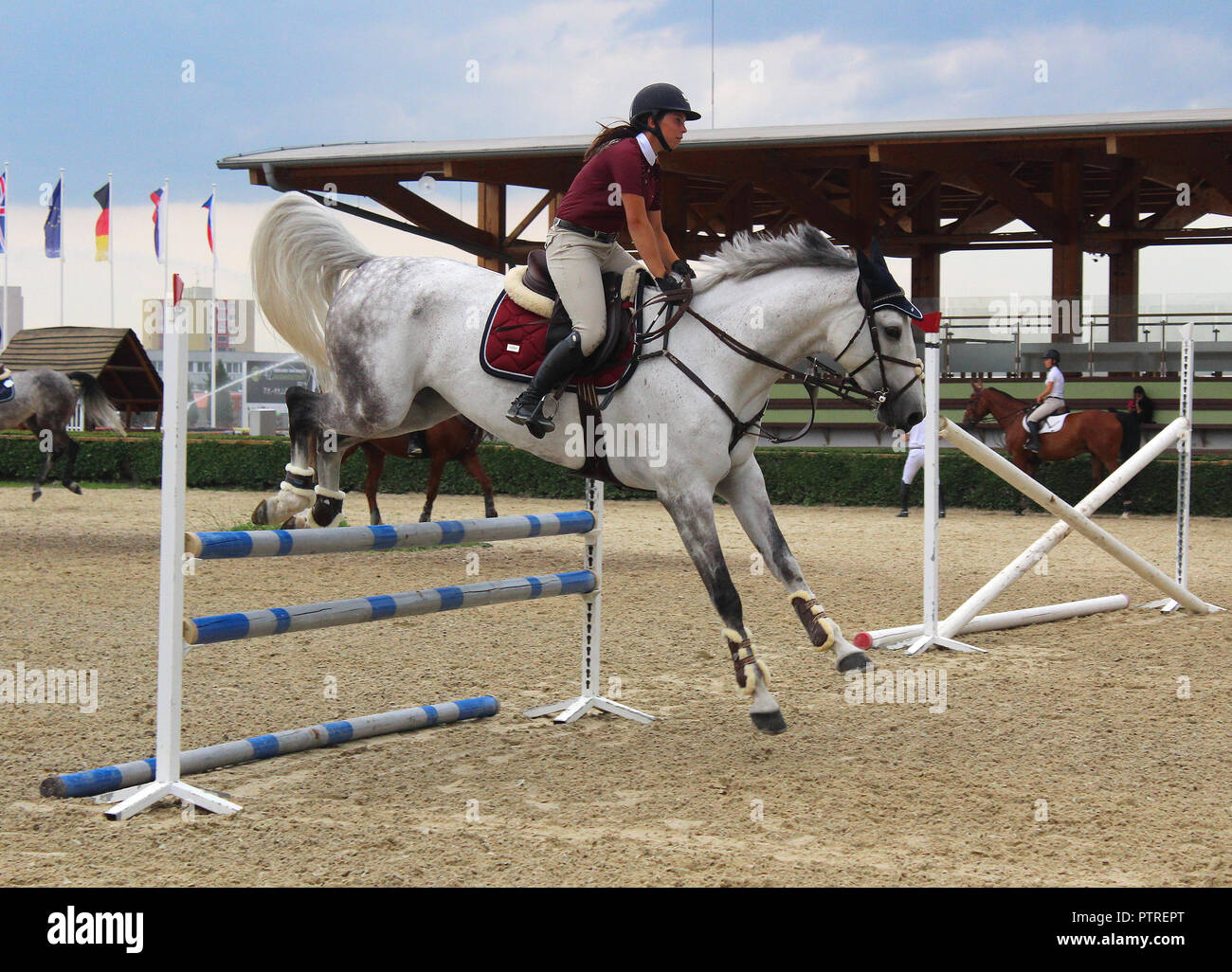 Show Jumping Training Female Rider On A White Horse Jumping Through A Barrier Stock Photo Alamy