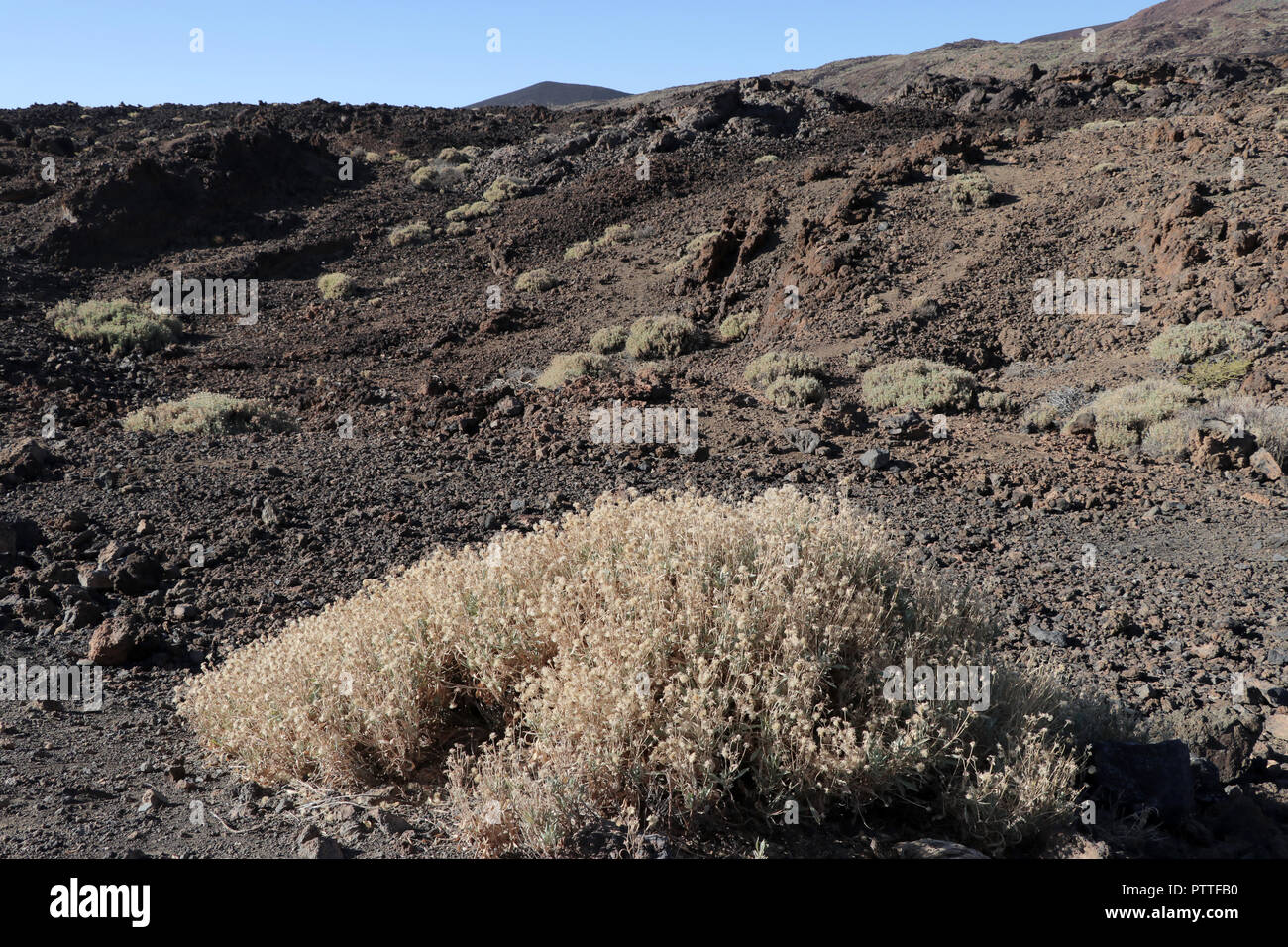 Chirche, Spanien. 18th Sep, 2018. Bald lunar landscape with sparse vegetation on the tour to the Pico del Teide on the Canary Island of Tenerife on 18.09.2018. The Pico del Teide (also Teyde) is with 3718 m the highest elevation on the Canary Island of Tenerife and the highest mountain in Spain. It belongs to the municipality of La Orotava. In 2007, the territory of the National Park was included in the World Heritage List by UNESCO. | usage worldwide Credit: dpa/Alamy Live News - Stock Image