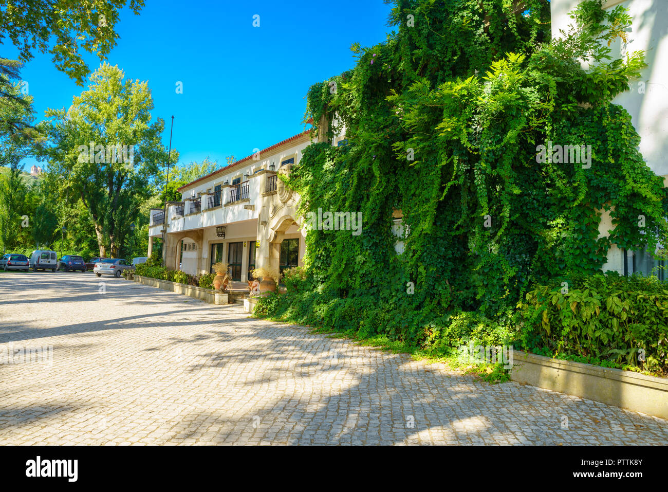 window in the wall of an old house overgrown by green wild grapes. Green plants on building facade. Nature texture Stock Photo