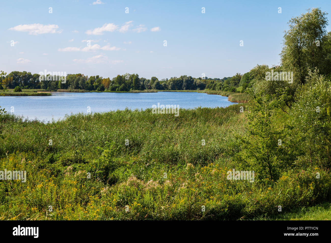 Lake in a park Stock Photo