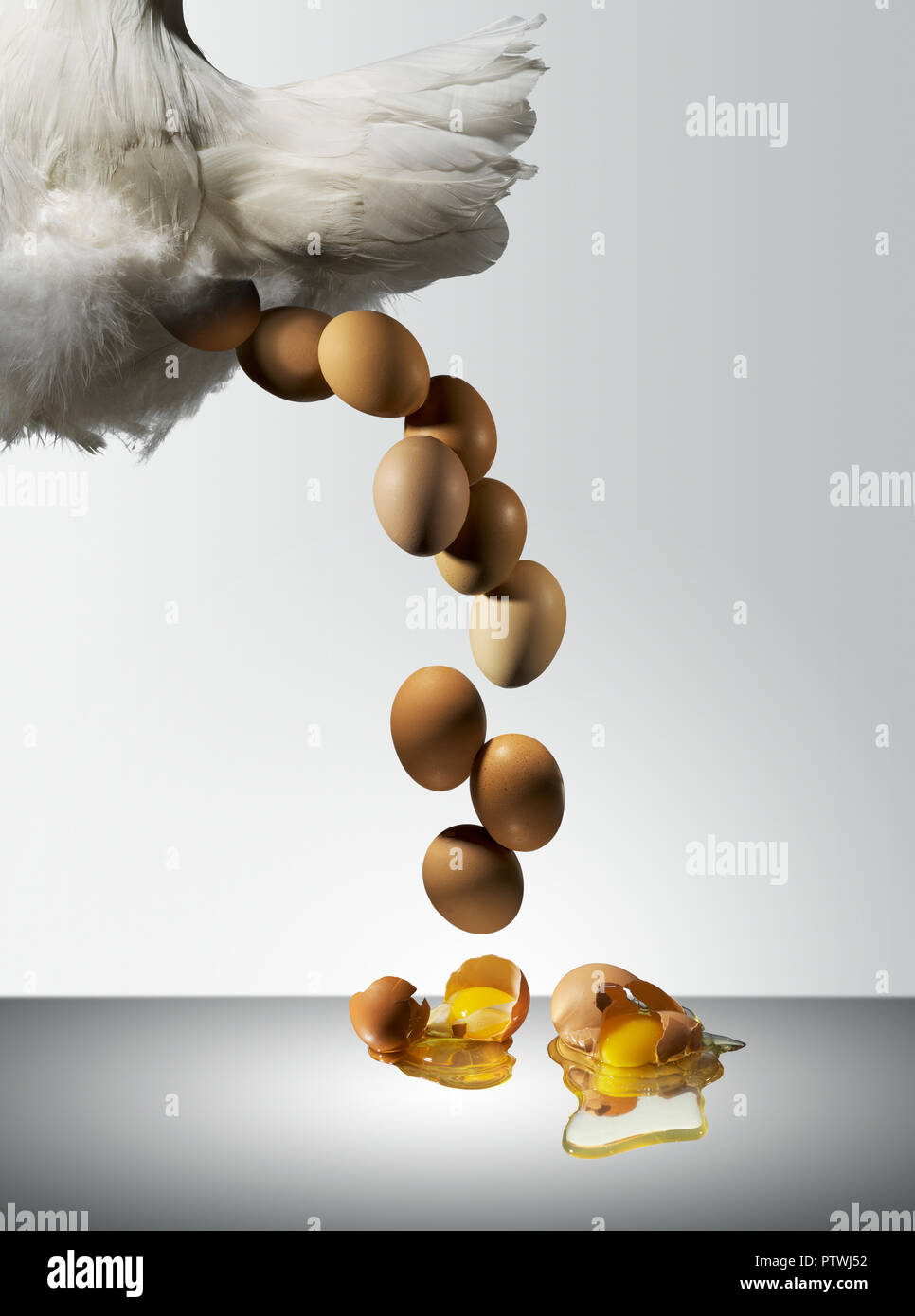 Hen laying fresh eggs with yolk and albumen spilling onto surface - Stock Image