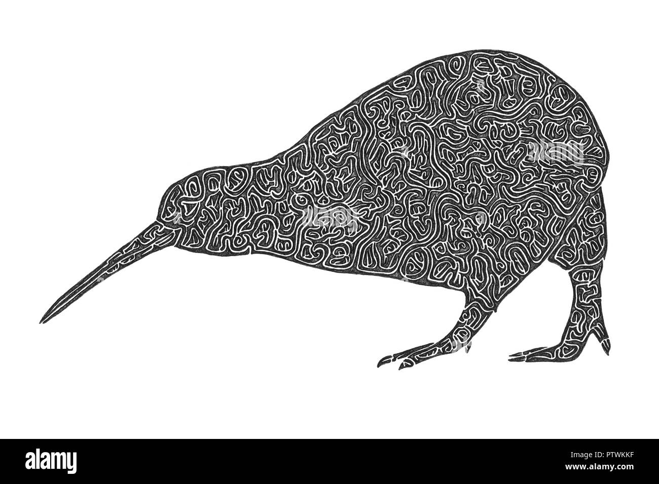 Illustration Drawing Of The Nocturnal And Flightless Kiwi The
