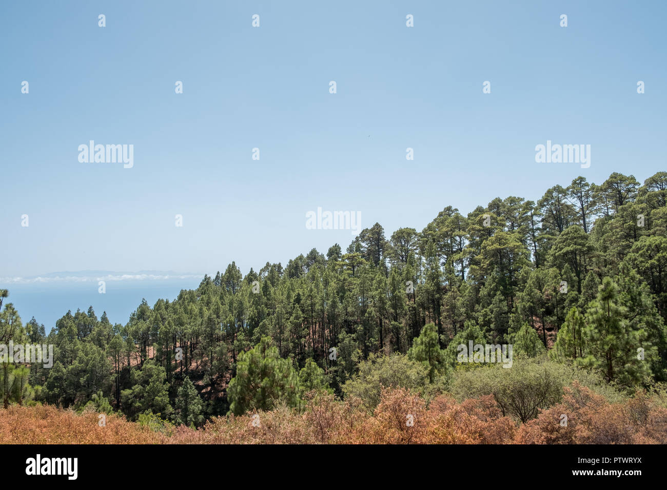 conifer forest landscape and blue sky copy space, - Stock Image