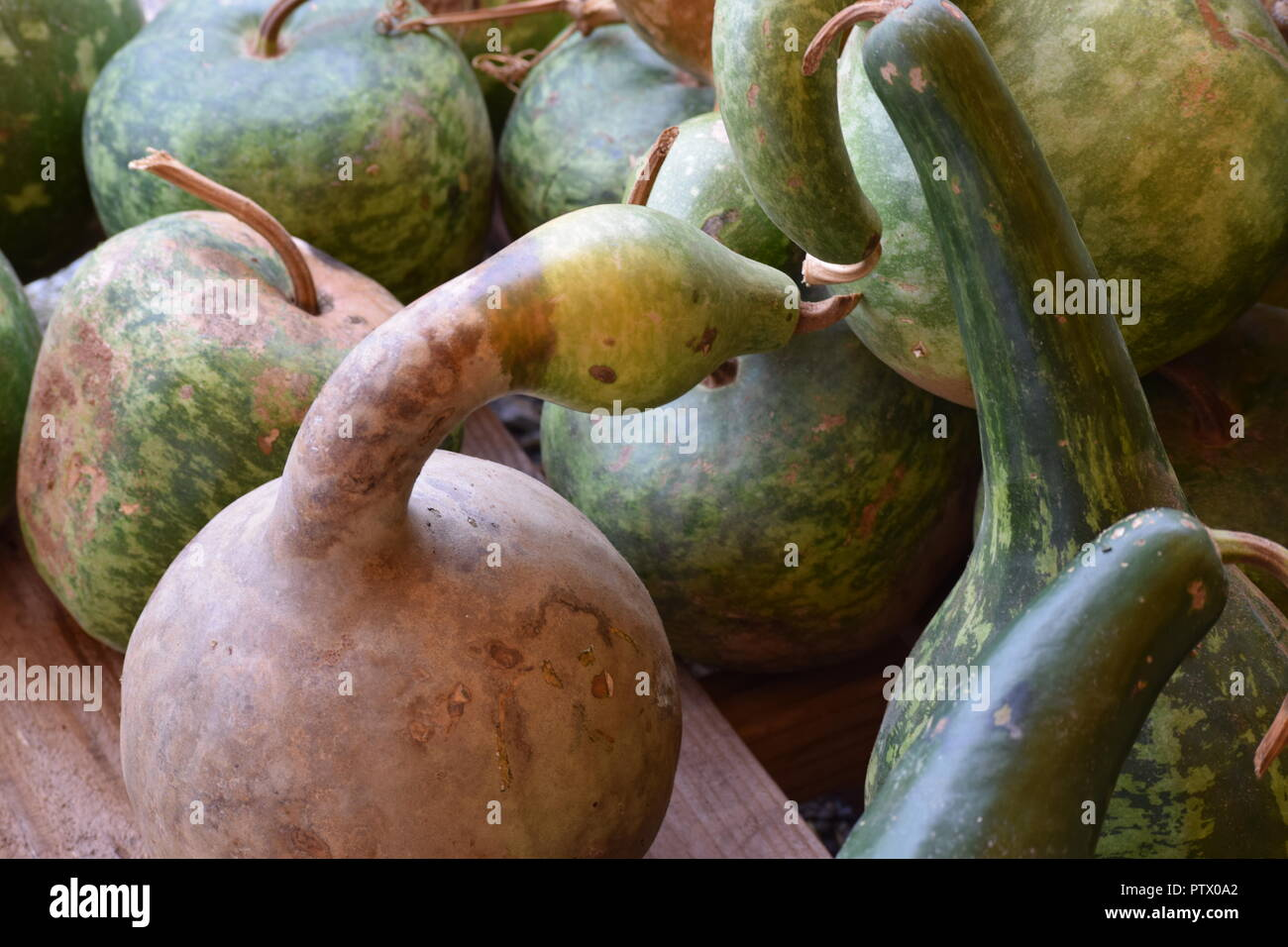 fall gourds for display and decorating - Stock Image