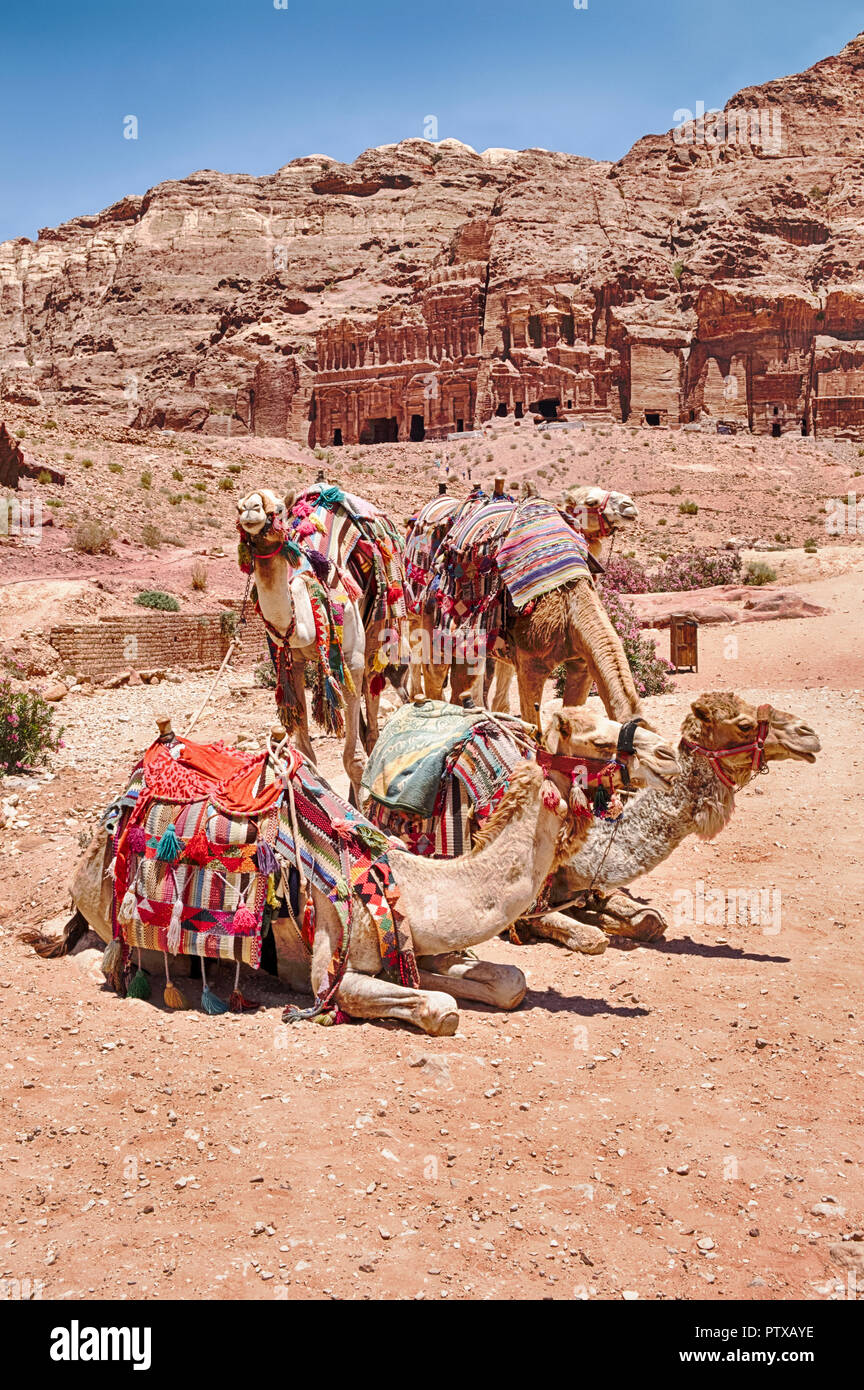 A small group of camels waits for a ride on the main path in the scenic destination of Petra in Jordan. Stock Photo
