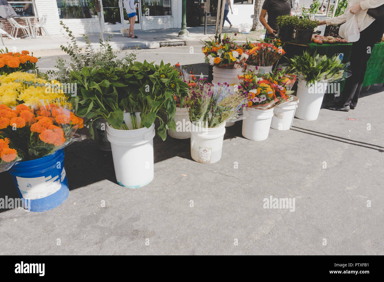 Southern California flower stand at Farmers market: Gorgeous flowers for sale on display in white buckets, natural light. - Stock Image