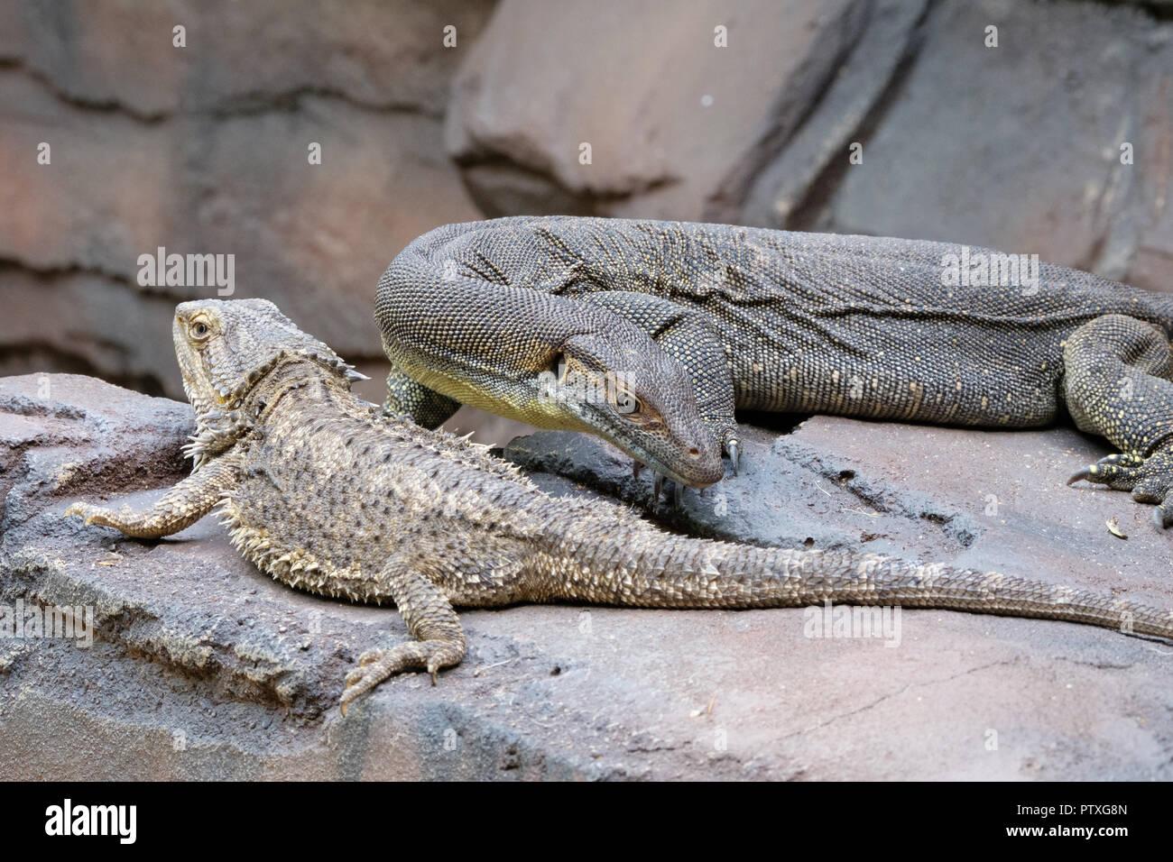 9d5566754cf63c Reptiles at Australia Zoo Stock Photo  221859701 - Alamy