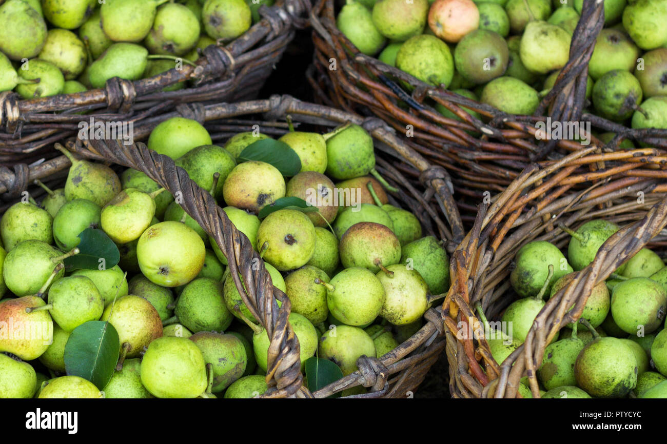 several baskets with pears standing on grass, punchbag - Stock Image