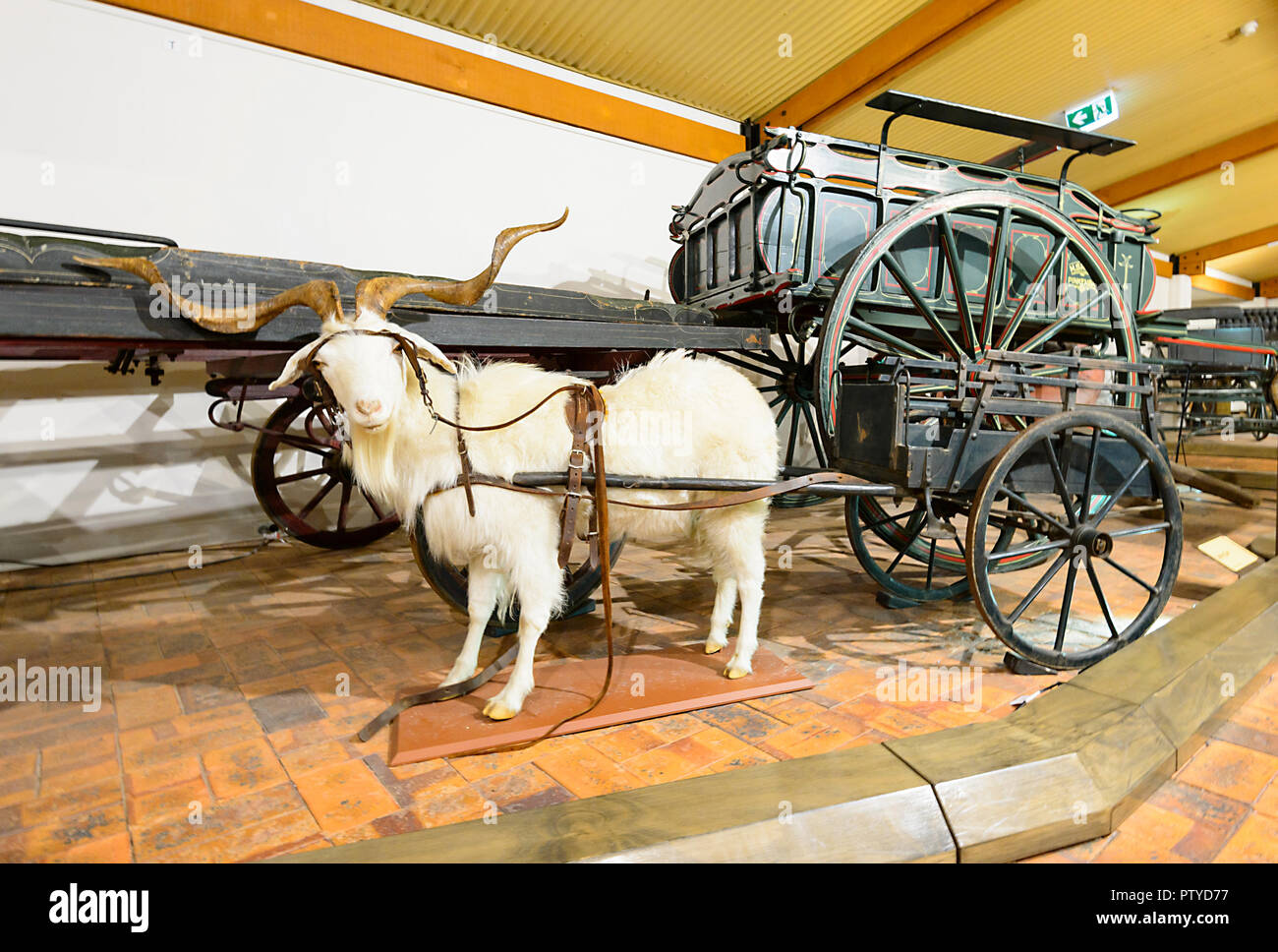 Goat drawn cart on display at the Cobb & Co Museum, Toowoomba, Southern Queensland, QLD, Australia - Stock Image