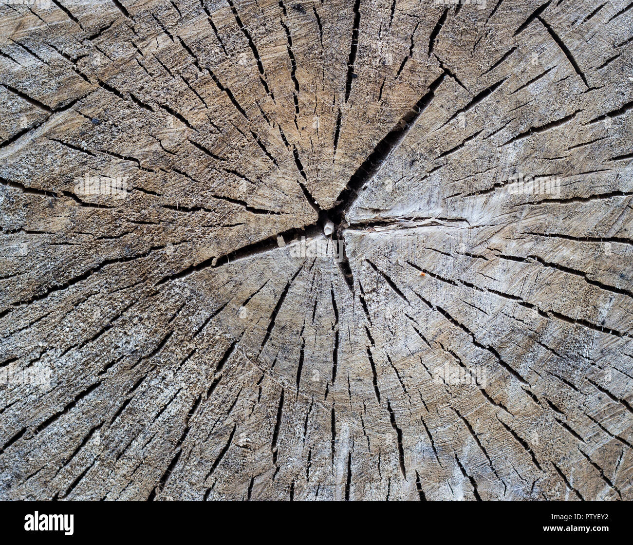 Texture of a tree with cracks, close-up Stock Photo
