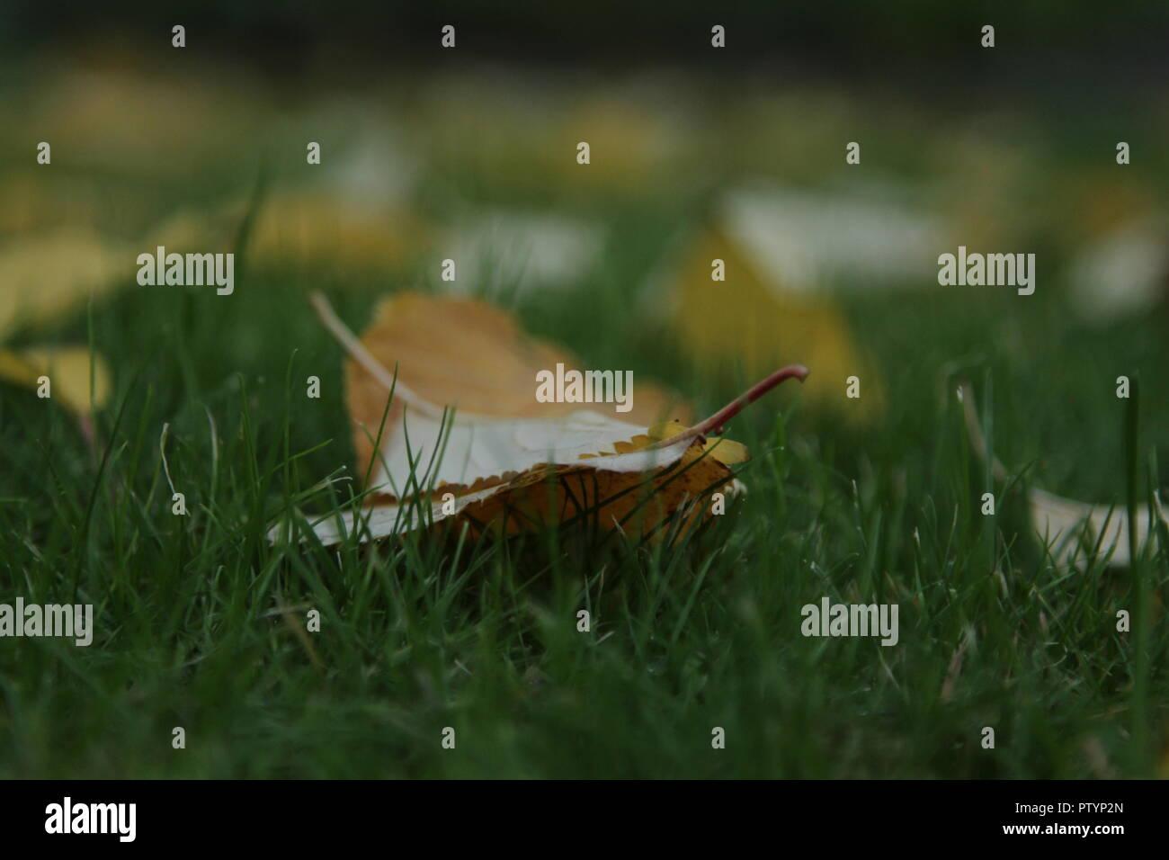 Autumn Leaves On Ground Focus - Stock Image