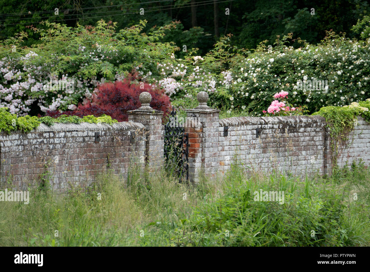 A picturesque garden wall with flowers on the River Way near Godalming in Surrey, England. - Stock Image