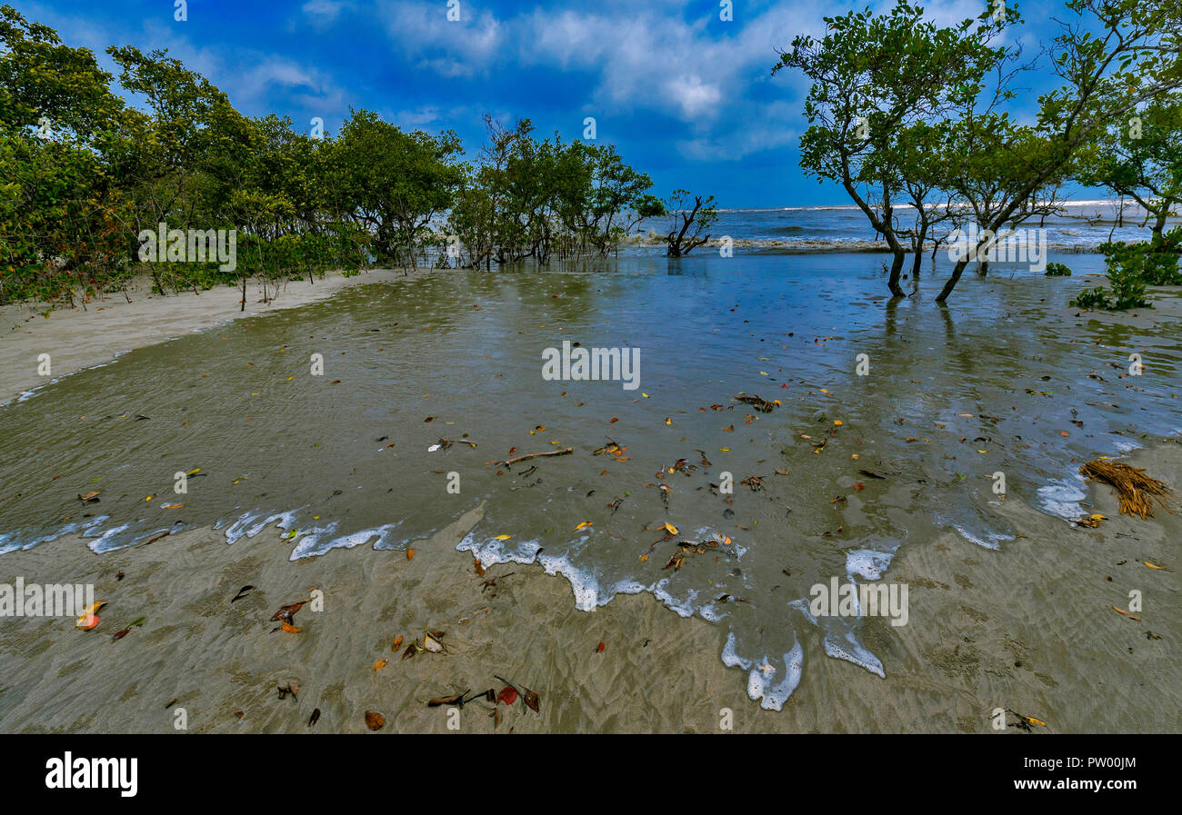 High tide grabbing the mangroves of Henri Island , West Bengal , India - Stock Image