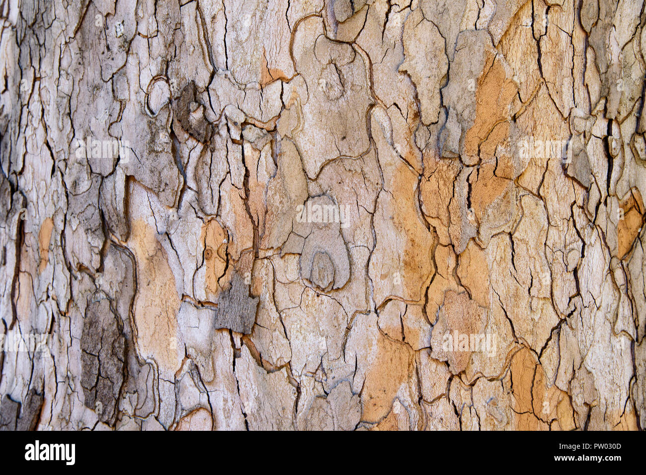 Tree bark texture, abstract wallpaper, rough surface - Stock Image