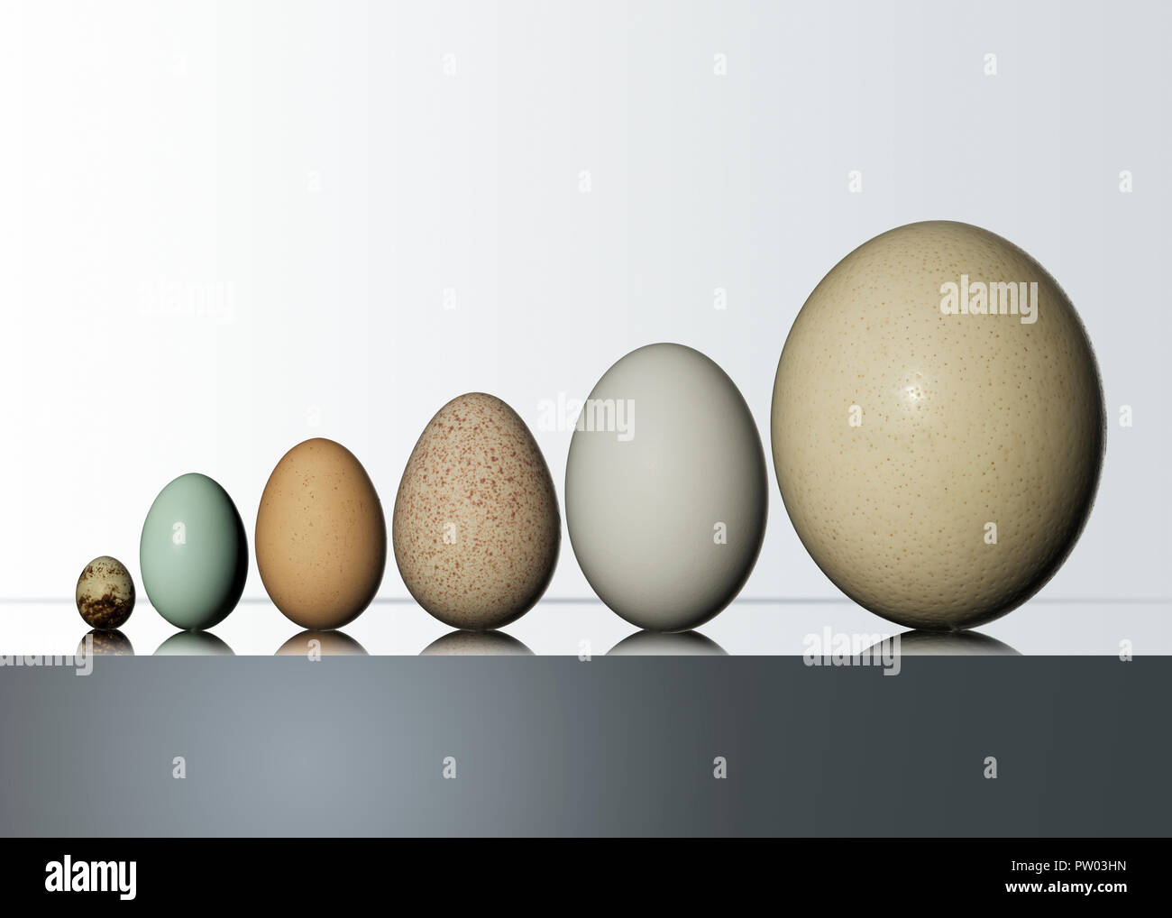 A group of Birds Eggs, Ostrich, Easter Egger, Turkey, Geese, Duck, Quail - Stock Image