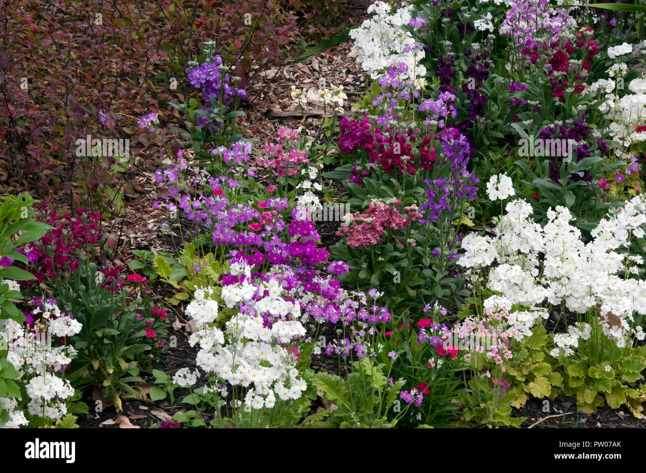 Sydney Australia Garden Of Early Spring Flowers Stock Photo