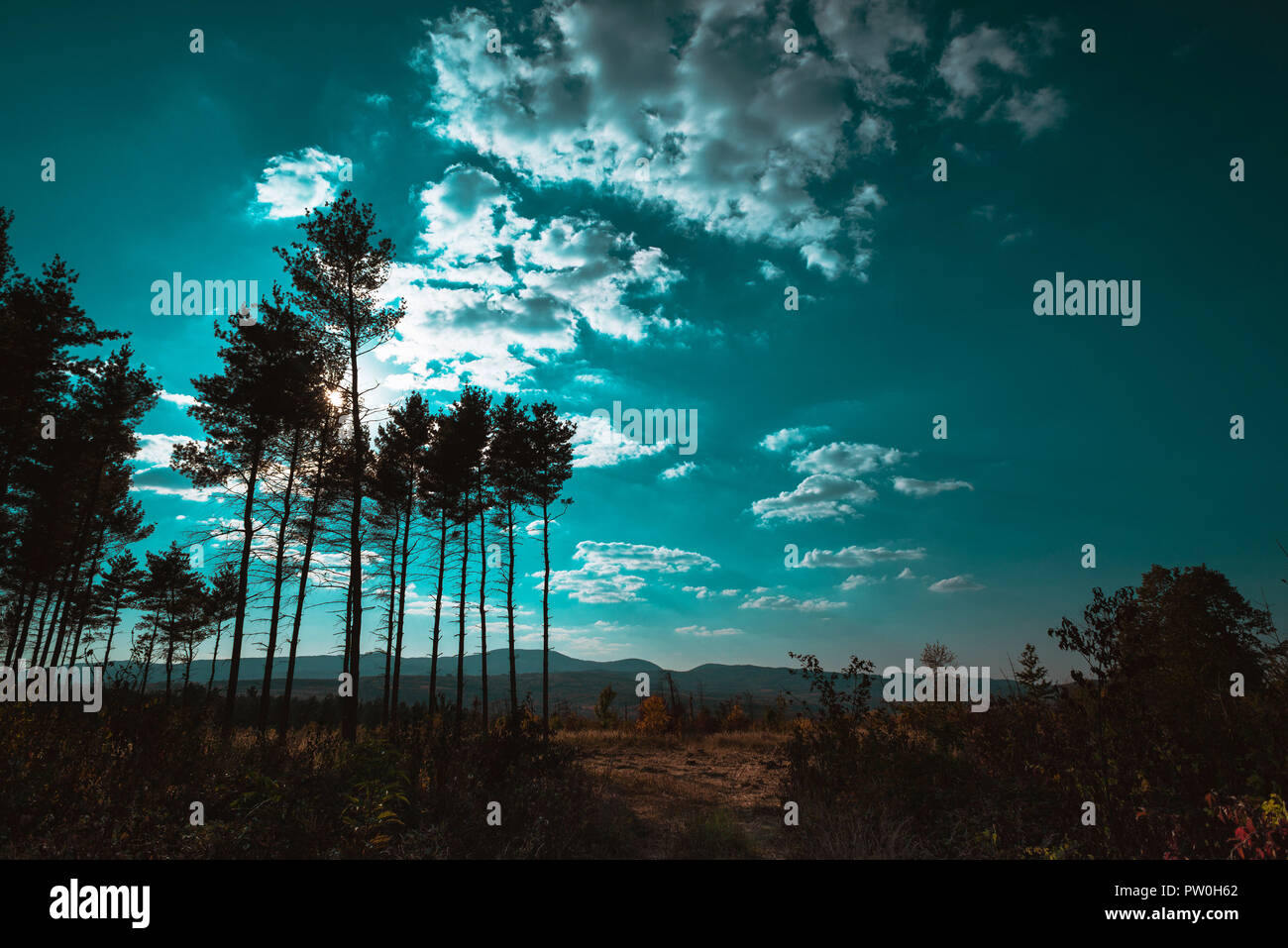 Interesting trees in the summer sky - Stock Image