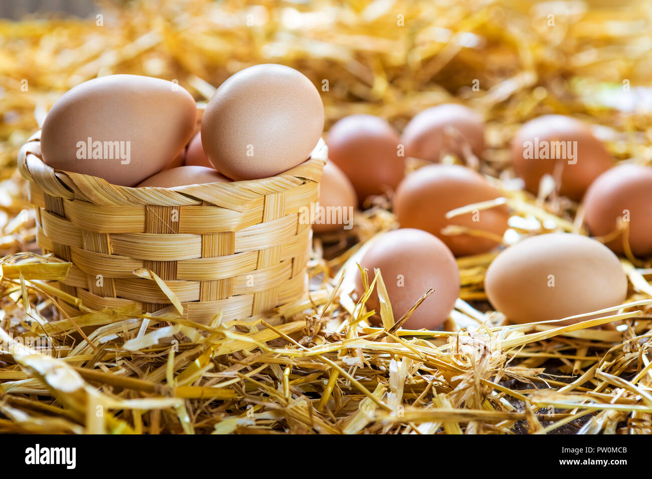Fresh and organic eggs in basket on straw in nest at farm Stock Photo
