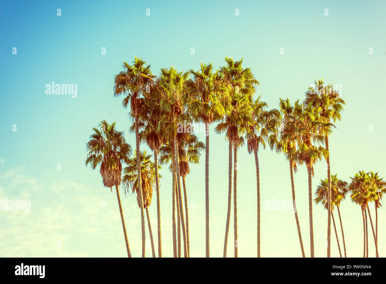 Group of palm trees. Photograph processed with vintage effect/feel. - Stock Image
