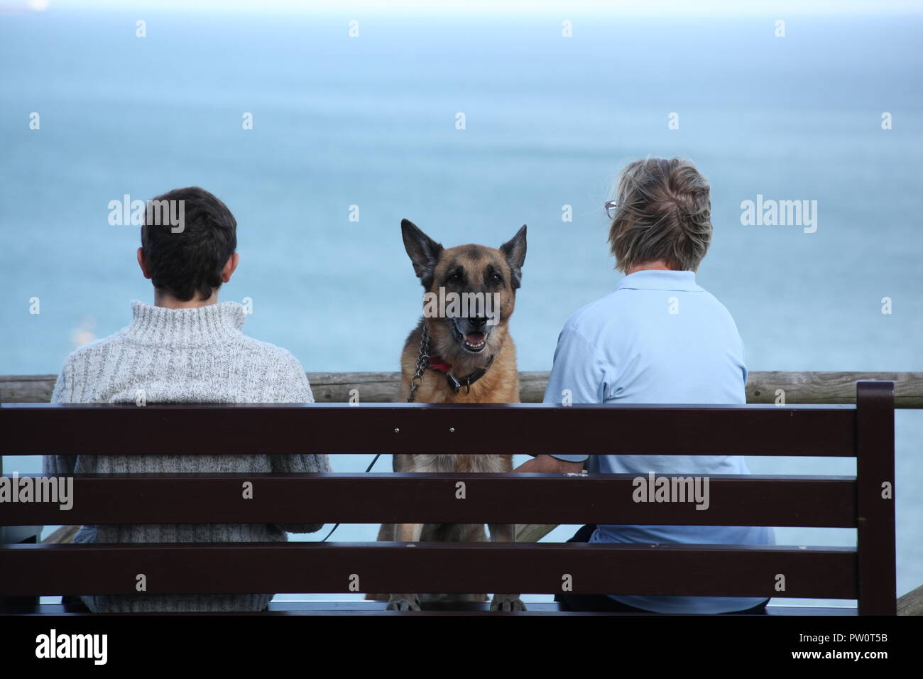 Family pet - German Shepherd - Stock Image