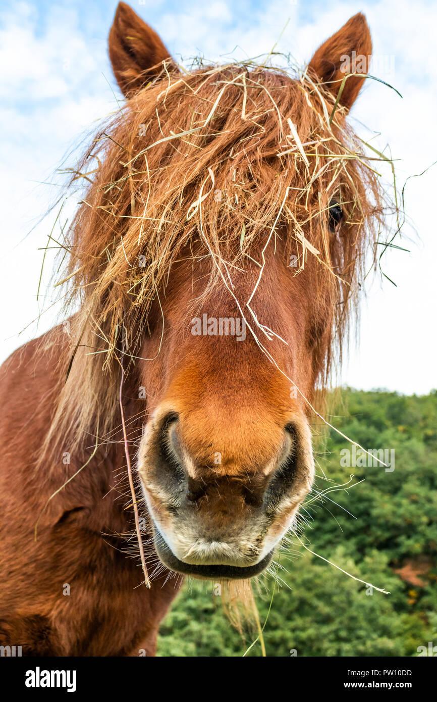 Funny Horse Close Up Stock Photo Alamy