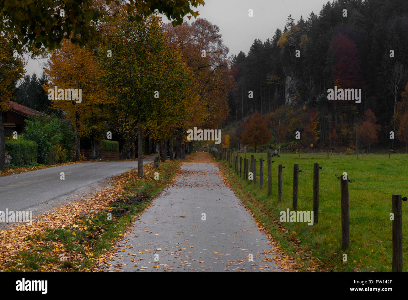 Autumnal alley going forward parallel with a road and the fence from a ranch near bavarian city Fussen in Germany. - Stock Image